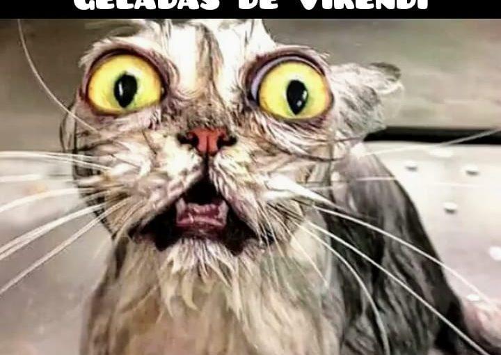 #membr #membrasil #memes #pubgpc #pubgbrasil #pubgnoob #pubgmemes #pubgbrazi …